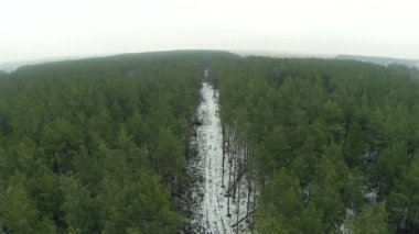 Over wood..Aerial  view — Stock Video