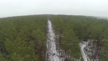 Flight over winter rural   wood..Aerial  view — Stock Video