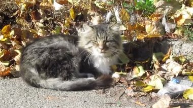 Street cat is basked in sun — Stock Video