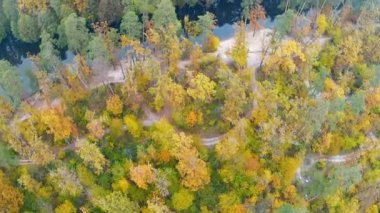 River in the wood.. Aerial clip — Vídeo stock