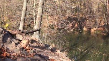 Podzimní žlutou slunné dřevo s jezerem. Jezdec výstřel — Stock video
