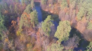 Up over  autumn wood with river  in yellow color. Aerial top view — Stok video