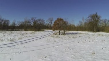 Old tree with faded leaves on  snow field. Aerial — Stok video