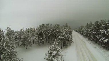 Winter forest with  empty road in gloomy weather. Aerial — ストックビデオ