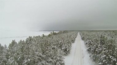 Up over winter forest with  empty road in gloomy weather. Aerial — Stock Video