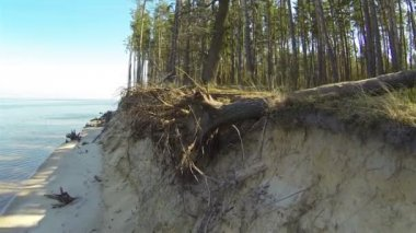 Roots of the fallen tree. Aerial shot — Stock Video
