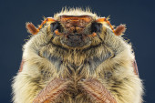 Cockchafer on a dark background close-up — 图库照片