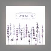 Vintage background with lavender flowers — Stock Vector