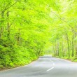 Road through the forest — Stock Photo #61746681