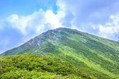 Summer Mountain — Stock Photo