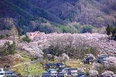 Flores de cerejeira no Takato — Fotografia Stock
