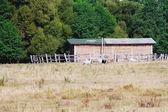 Pasture on the farm — Stock Photo