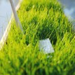 USB Wi Fi Adapter in green grass — Stock Photo #77907658