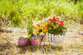 Wheelbarrow with flowers — Stock Photo