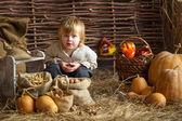 Boy with pumpkins — Stock Photo