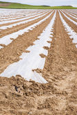 Cultivation with plastic lines — Stock Photo