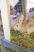 Rabbit looking — Stock Photo