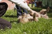 Woman hand baby petting dog — Stock Photo