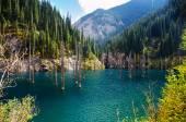 Kaindy Lake in Tien Shan mountain, Kazakhstan.  — Foto Stock