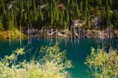 Kaindy Lake in Tien Shan mountain, Kazakhstan.  — Stock Photo