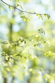 Natural background with fresh spring twig in selective focus — Stock Photo