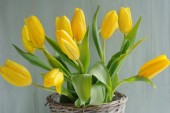 Spring yellow tulips bouquet in basket — Stock Photo