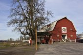 Animal barn and large tree Oregon. — 图库照片