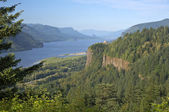 Columbia River Gorge and surrounding forests. — Stock Photo
