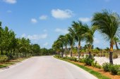 Palm trees along a road — Stock Photo