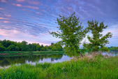 Countryside trees river sky dawn — Stock Photo