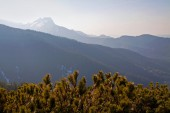 Mountain landscape with tree forest — Stock Photo