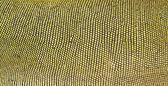 Green iguana skin — Zdjęcie stockowe