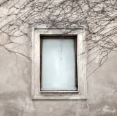 Windows and dried vine — Stock Photo