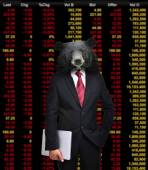 Bear market, stock investment concept — Stock Photo