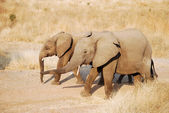 Un día de safari en Tanzania - África - elefantes — Foto de Stock