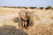 One day of safari in Tanzania - Africa - Elephants — Stock Photo