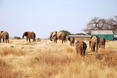 One day of safari in Tanzania - Africa - Elephants — Foto de Stock