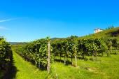 Italian Vineyards - Valpolicella Wine — Stock Photo