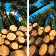 Wooden Logs with Forest on Background — Stock Photo #60540119