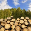 Wooden Logs with Forest on Background — Stock Photo #60698387
