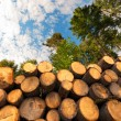 Wooden Logs with Forest on Background — Stock Photo #60698411