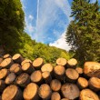Wooden Logs with Forest on Background — Stock Photo #60698579