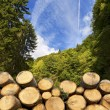 Wooden Logs with Forest on Background — Stock Photo #60698635