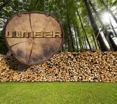 Firewood in the Woods and Lumber Sign — Stock Photo