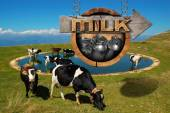 Milk - Wooden Sign with Grazing Cows — Stock Photo