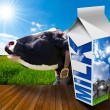 Milk Carton in Countryside with Cow — Stock Photo #74991537