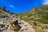 Trail in Mountain - Adamello Trento Italy — Stock Photo