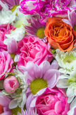 Colorful flowers — Stock Photo