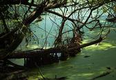 Shady pond — Stock Photo