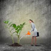 Businesswoman watering green money tree — Stock Photo
